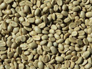 Avant torréfaction, la graine de café est verte
