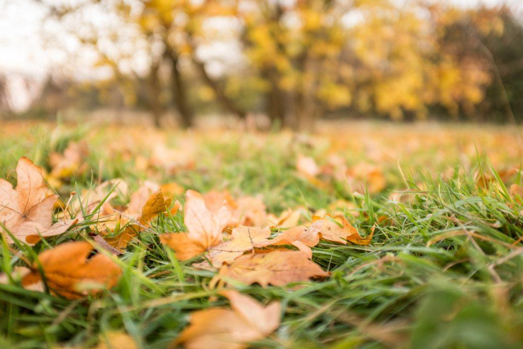 En automne, il faut adapter sa routine beauté